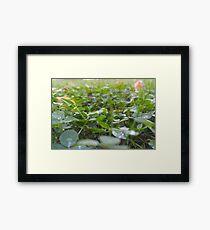 Clover Fields Framed Print