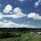 Island of Wild Ponies by Nikki Moore