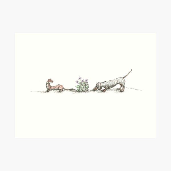 Dachshund, Weasel, and Violets, illustration Art Print