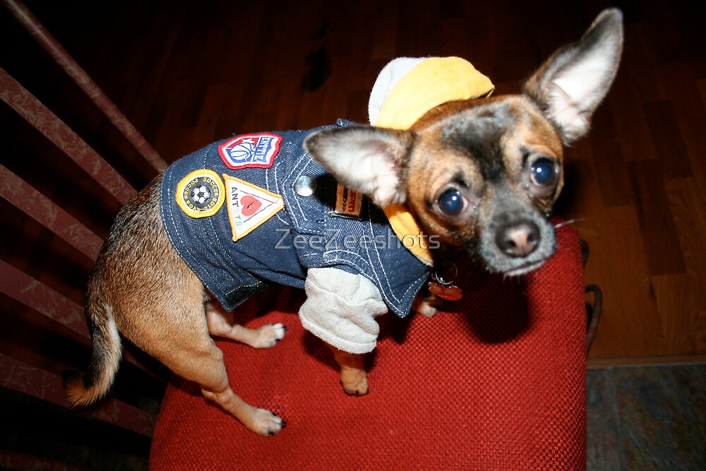CHICO ALL DRESS TO GO OUT by ZeeZeeshots