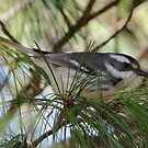 Rare Bird by Todd Weeks