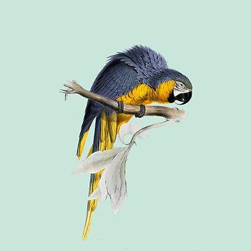 Papagei - illustration by Edward Lear von CGoltz