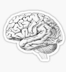 Watercolor Anatomical Brain Sticker