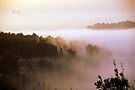 Foggy morning by Moshe Cohen