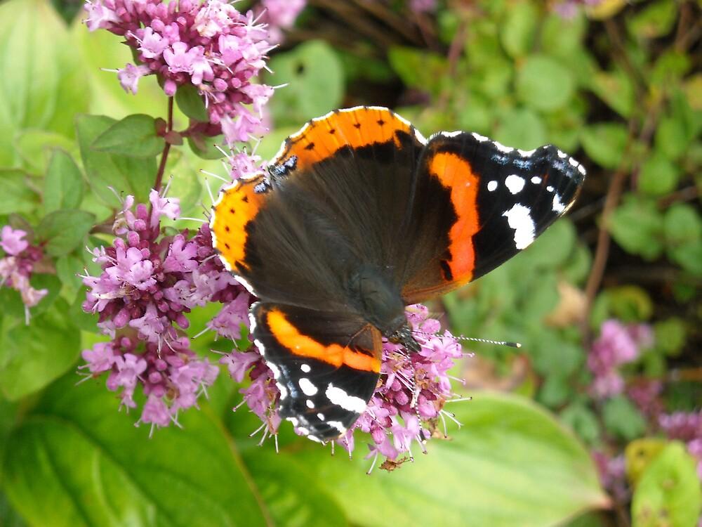 Beautiful Butterfly by Rachel Harris