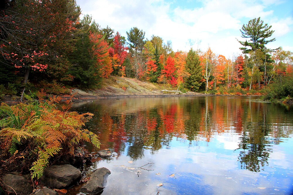 Reflections of Oxtongue by Dave Law