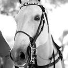 WHITE MARE - HORSE EQUESTRIAN by Daniel  Oyvetsky