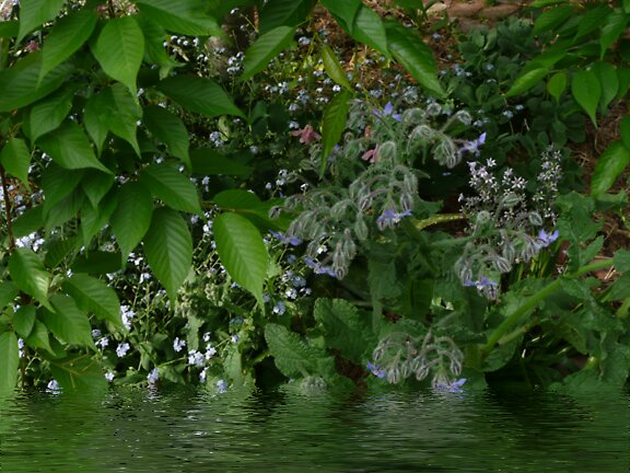 Leaves and Forget Me Nots... by Julia Mainwaring-Berry