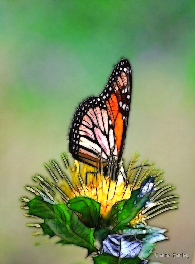 Happy Butterfly by Claire  Farley