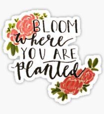 Bloom Sticker Sticker