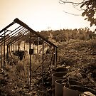 Tragedy of a Lost Allotment by Bob Davies