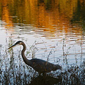 Autumn Egret by brodrickmade