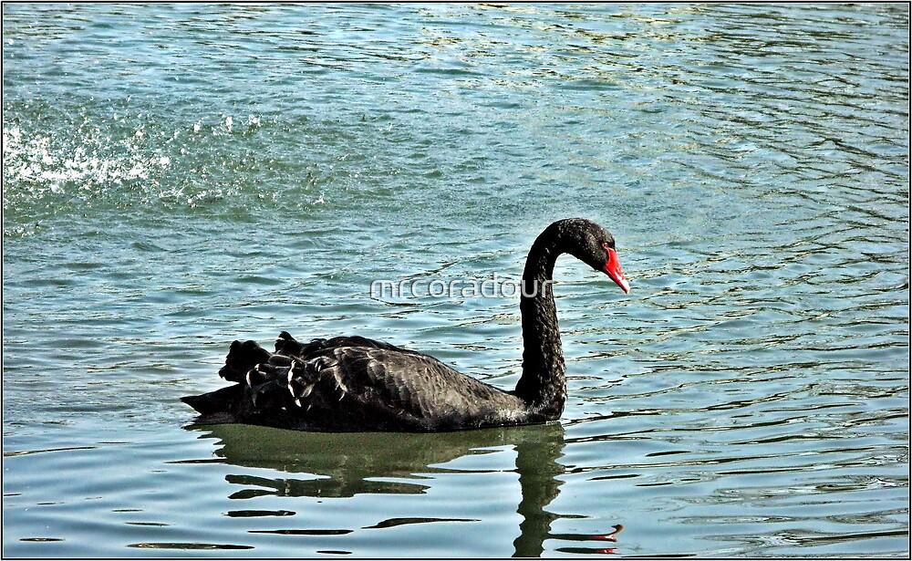 Black Swan by Malcolm Chant