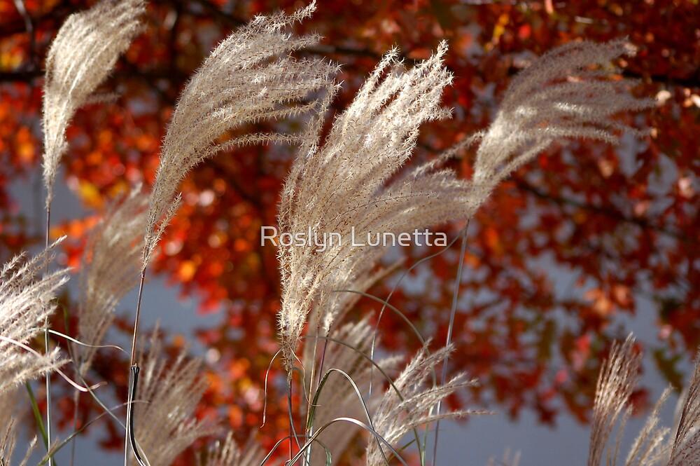 pampas flower spikes in honor of Feldore by Roslyn Lunetta