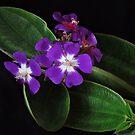 Hawaiian Tree Flower by Rodney Wratten