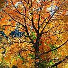 Under The Golden Tree by Bonnie M. Follett