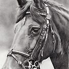 horse portrait (4692) by Samantha Norbury