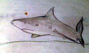 shark sketch by pinkyfizz