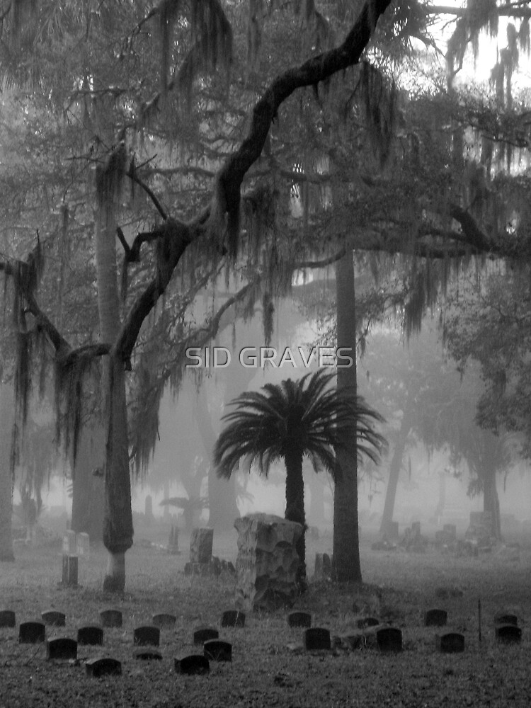 """""""FOGGY PALMS"""" by SID GRAVES"""