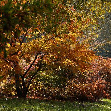 Autumn in Lodz's Botanic Garden 001 by millotaurus
