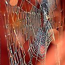 In the web.  by Seraphina6