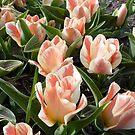 Johann Strauss tulip by bubblehex08