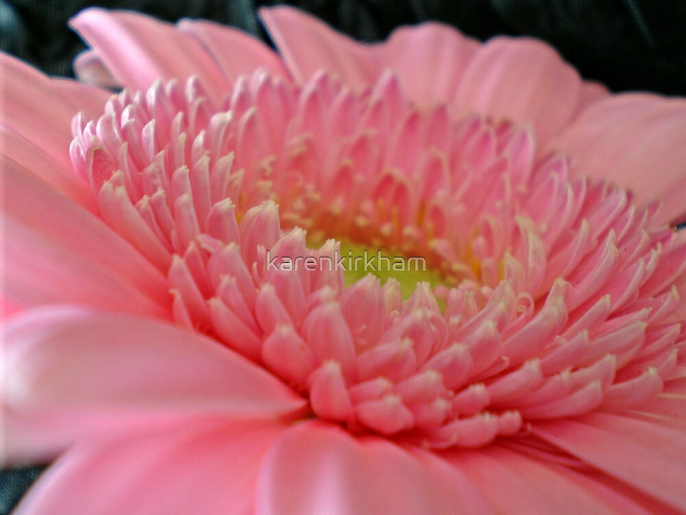 Pink Gerbera 3 by karenkirkham