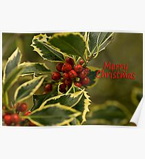 Merry Christmas! Holly and Berries Poster