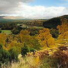 Cairngorms National Park by Mirka Rueda Rodriguez