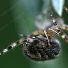 a spinning spider by zembla