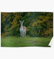Studley Royal Deer Park Poster