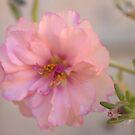 Pink! by Debbie Irwin
