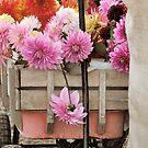 Falls Blossom by Jennifer Vickers