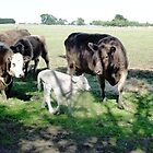 Friends come to say Moo to Casper - 3 hrs. old. by EdsMum