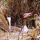 Duck Nesting by R&PChristianDesign &Photography