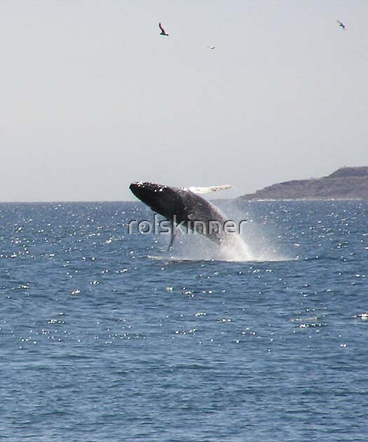 Whale by rolskinner
