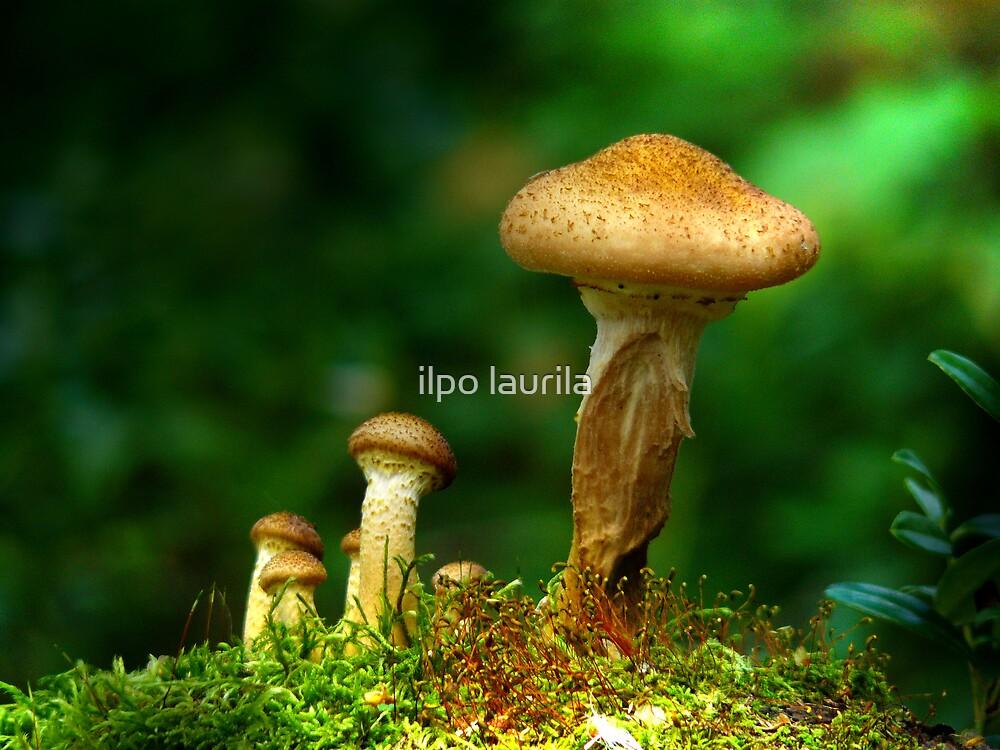 Mushrooms  by ilpo laurila