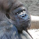 Portrait of a Silverback by JulieM