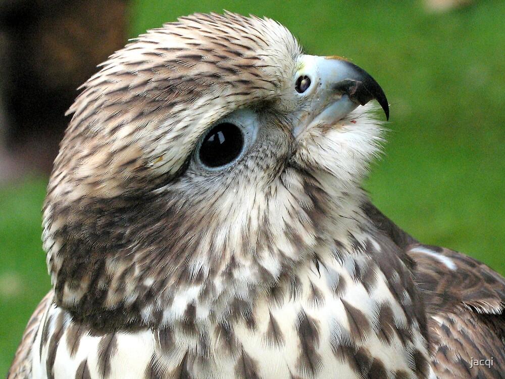 Falcon by jacqi