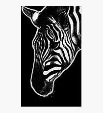 Leucism: Plains Zebra Photographic Print