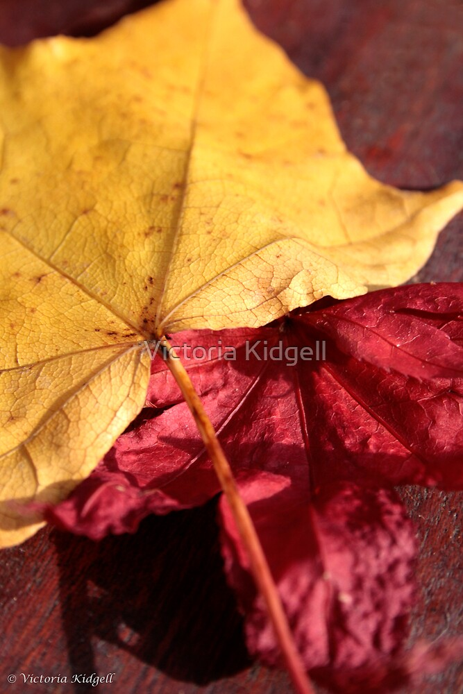Yellow and Red by Victoria Kidgell