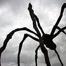 Spider by Hena Tayeb