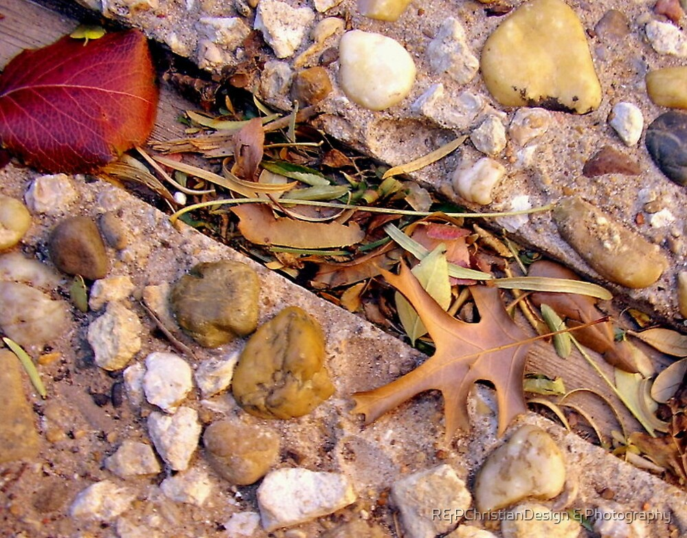 Autumn Leaves by R&PChristianDesign &Photography