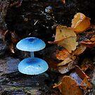 Tiny life in Myrtle forest, Tasmania by tasadam