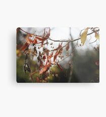 Autumn Leaves in Cambridgeshire England Metal Print