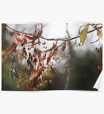 Autumn Leaves in Cambridgeshire England Poster