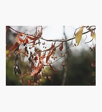 Autumn Leaves in Cambridgeshire England Photographic Print