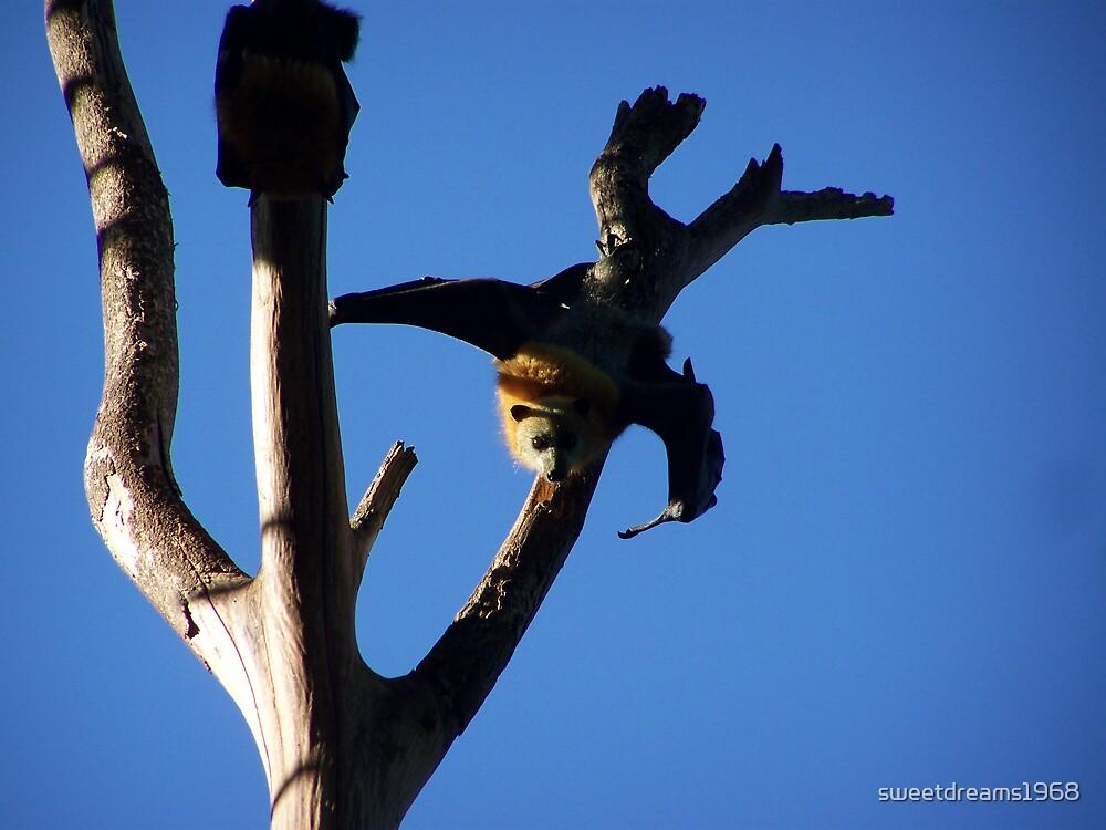 Just Hangin' by Carol Field
