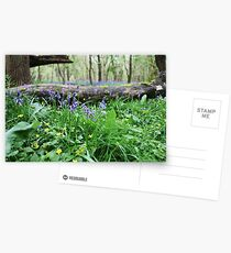 Bluebell wood in Cambridgeshire, England Postcards