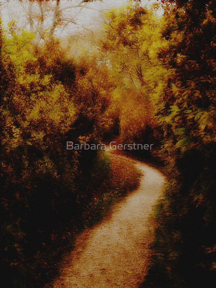 Into the woods by Barbara Gerstner